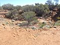 Meteor impact cracter - panoramio.jpg