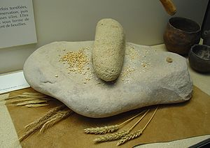 Ancient Israelite cuisine - An upper hand stone was used to grind grain on the lower quern stone.