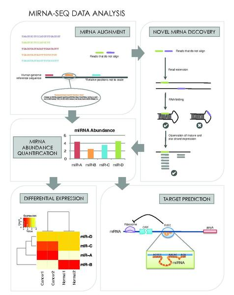 File:Mirna seq data analysis.pdf