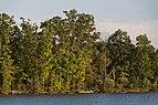 Mixed Forests around Alum Creek Lake 1.jpg