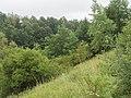 Monheim Weilheim Schliffflächen am Bahnheimeinschnitt 006.jpg