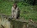 Monkey from Bannerghatta National Park 8557.JPG