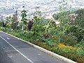Monte Palace Tropical Garden DSCF0162 (4642524163).jpg