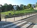 Montmartre vineyard.jpg