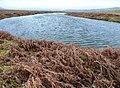 Moorland pool - geograph.org.uk - 693958.jpg
