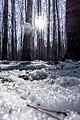 Moose island - panoramio (3).jpg