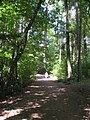 Mount Douglas Park trail. READ INFO IN PANORAMIO-COMMENTS - panoramio.jpg