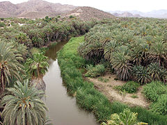 Mulege oasis