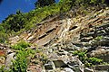Muscovite schist (Precambrian; Blue Ridge, North Carolina, USA) 6.jpg