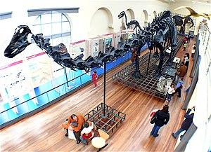 Museo Nacional de Ciencias Naturales - Image: Museo Nacional de Ciencias Naturales (Madrid) Sala de Historia Natural