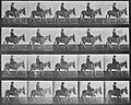 Muybridge, Eadweard - Zoospaziergang, mit Reiter (0.36 Sekunden) (Zeno Fotografie).jpg