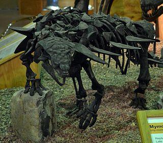 <i>Mymoorapelta</i> genus of reptiles (fossil)