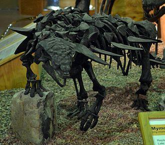 Mymoorapelta - Cast in Wyoming Dinosaur Center