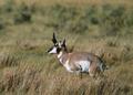 NRCSMT01045 - Montana (4939)(NRCS Photo Gallery).tif