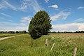 NSG Recker Moor Bardelgraben 02.JPG