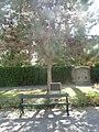 NWMSA-WWI-LonePine-tree.jpg