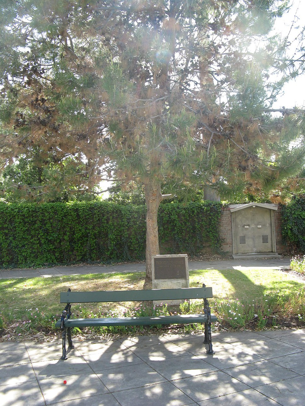 NWMSA-WWI-LonePine-tree