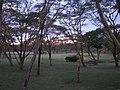 Naivasha Sopa lodge (7513171774).jpg