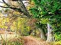 Naked Oak - panoramio.jpg