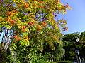 Nanakamado tree in autumn, Akita.jpg