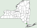 Narcissus jonquilla NY-dist-map.png