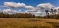Nationaal Park Drents-Friese Wold. Locatie Dieverzand. Natte plek in een verruigde open plek in het bos 04.jpg