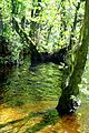 Nationalpark Jasmund - Modderstubben (2).jpg