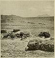 Native Dwellings, Abd-el-Kuri.jpg