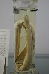 Natural History and Technology Museum of Shiraz University Darafsh (9).JPG