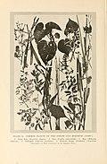 Natural history of Hawaii (Page 198) (7007396470).jpg