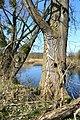 Naturschutzgebiet Haseder Busch - Am Altarm (13).jpg