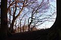 Naturschutzgebiet ST-094, Am Bagno-Buchenberg.dec2014.1.JPG