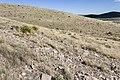 Near Border Hill - Flickr - aspidoscelis (2).jpg