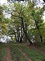 Nebušice, lesní cesta poblíž Ševčice.jpg
