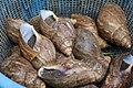 Nigerian Snails.jpg
