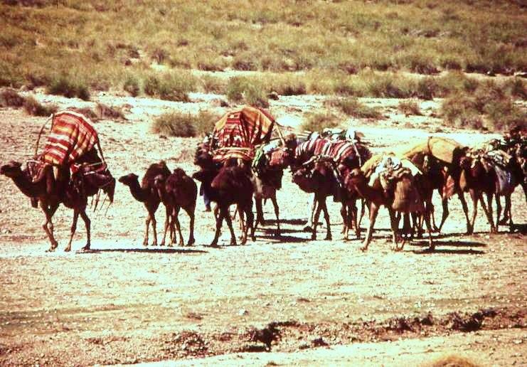 Nomades Algérie