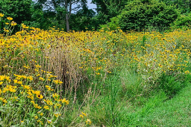 File:Norfolk Botanical Garden Meadow NBG LR.jpg