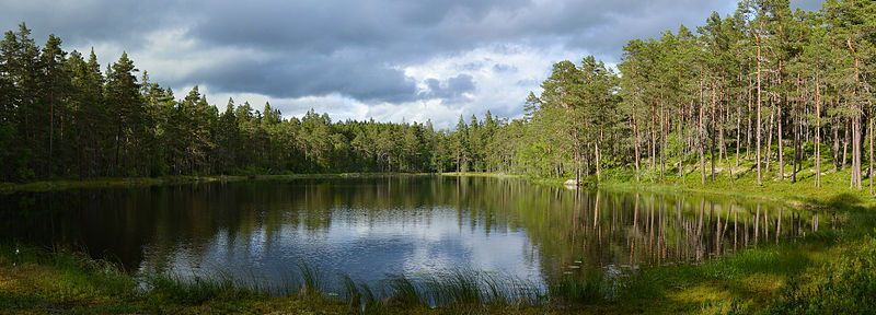 Datei:Norra Kvill National Park, Sweden (by Pudelek).jpg