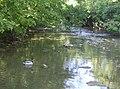 Nunney Stream - geograph.org.uk - 440662.jpg