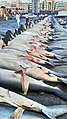 Old Deira Fish market.jpg