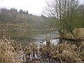 Old Reservoir, Flimby Great Wood - geograph.org.uk - 103229.jpg