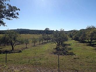 Bracalba, Queensland - Orchard, Gamgee Road, 2015