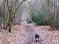 On the Bridleway in Shrubs Wood, Hastoe - geograph.org.uk - 1201349.jpg