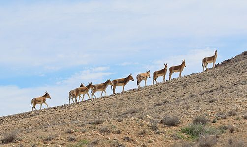 File:Onagers Negev Mountains 1a.jpg