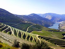 The Douro Valley, where port wine is produced