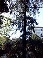 Orto botanico di Napoli 81.jpg