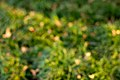 Out of Focus Green Backgounds-1.jpg