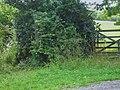 Overgrown footpath near Abbotts Wood - geograph.org.uk - 1417289.jpg