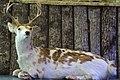 Oxbow Meadows Taxidermied Cervidae.jpg