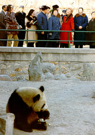 Panda diplomacy - U.S. First Lady Pat Nixon viewing the Beijing Zoo panda exhibit in February 1972.